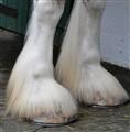 Boxer's Feet