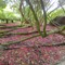 P1010010 Heligan Gardens, Cornwall, England