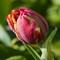 macro-flowers-150419-27