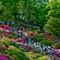 Crowds for the Azaleas at Nezu shrine