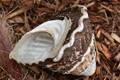 Overturned Shell