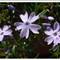 garden_0285h