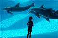 my daughter and dolphins