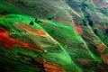Bird's-eye view: Northern Viet Nam