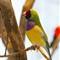 Grasslands-Bird