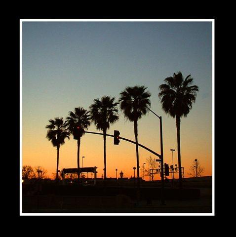 04-04-06four palm trees framed San Jose 58