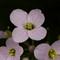 macro-flowers-150419-2