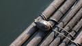 Turtle raft