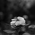 Paddi Flower