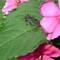 besouro colorido (14)b