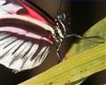 butterfly-201