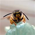 Bee's broken antennaLX3