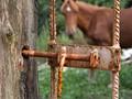 Closed horse