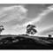 SS 20-05-12 106_stitch-HDR-greyscale_internet