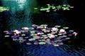 DSC_021.....the lilies.....