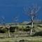 FZ30-BadLandTrees: