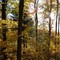 Forest Pano: