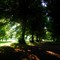 Evening light, Tyne Green Hexham