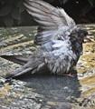 Wet wing