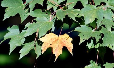 Leaf Says..... I'm Not Waiting Any Longer 037
