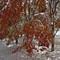 First snow, Japan