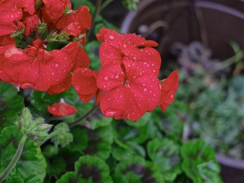 flower PP