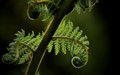 Ferns-love-shade