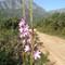 Jonkershoek / Stellenbosch