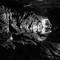 Ingleborough Cave (4)