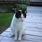cat_Monstruo_20110609_007