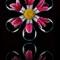 Flower bulb reflection 2