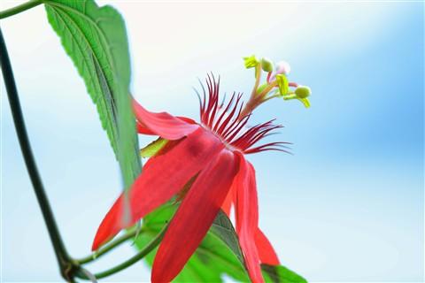 floral_11