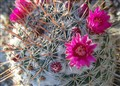 A Blooming Pincushion