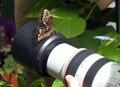 Butterfly Lens