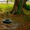 Ranch House Tire Swing