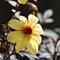 flower-8655