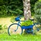 french_bicycle