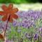 rusty_flower