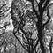Trees in Ibirapuera