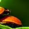 ladybugs_4_21_13