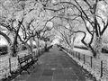 Conservatory Garden (Central Park, NY)