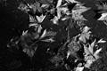 Crackle Leaves