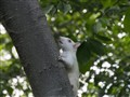 Albino Squirrel @ iso 6400