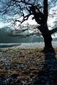tree silhouette 2 1000