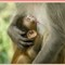 Monkey 04)a