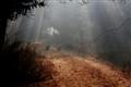 AmbarishDeshmukh_TrailsofBharapur