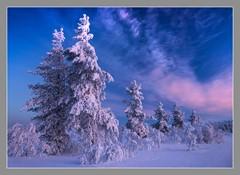 On february landscape