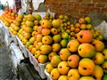 Mangoes for sale~