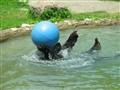 Jun 24 2003 Metro Zoo 009