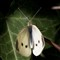 2010-09-19-Papillons-du-jardin-067b